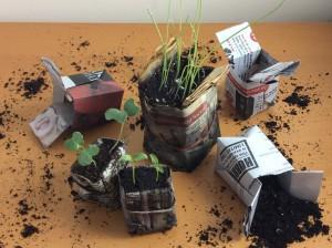seedling origami pots