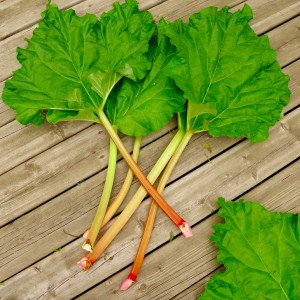 rhubarb_leaves_stalks