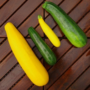 Zucchini of varying sizes