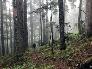 sunshine coast trail mist